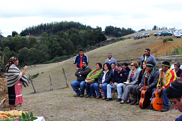 Alcaldesa Astudillo participa en ceremonia de término de cosecha de quinoa en Las Mellizas