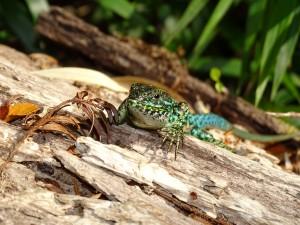 El 2ª lugar de la categoría Fauna y Bosque Nativo - Alerce Milenario